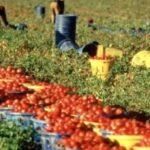 Al lavoro nelle campagne dall'alba al tramonto, senza ferie né giorni di riposo, per meno di due euro all'ora