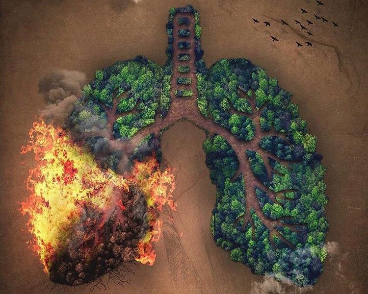 Gli incendi dell'Amazzonia e le bistecche di Macron