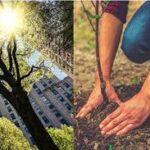 Le città devono pensare agli alberi come a un'infrastruttura di salute pubblica
