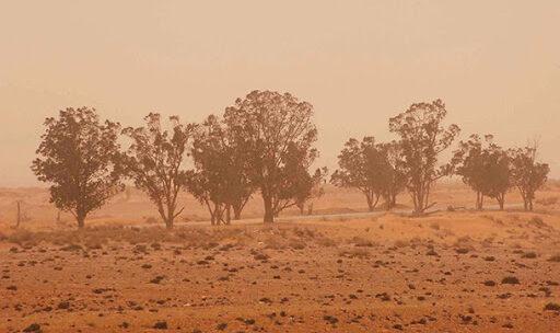 Ambiente. L'allarme del WWF: sparita metá della superficie forestale della Terra