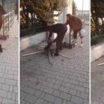 Ragazzo nigeriano mangia gatto per strada, un evento che dovrebbe farci riflettere