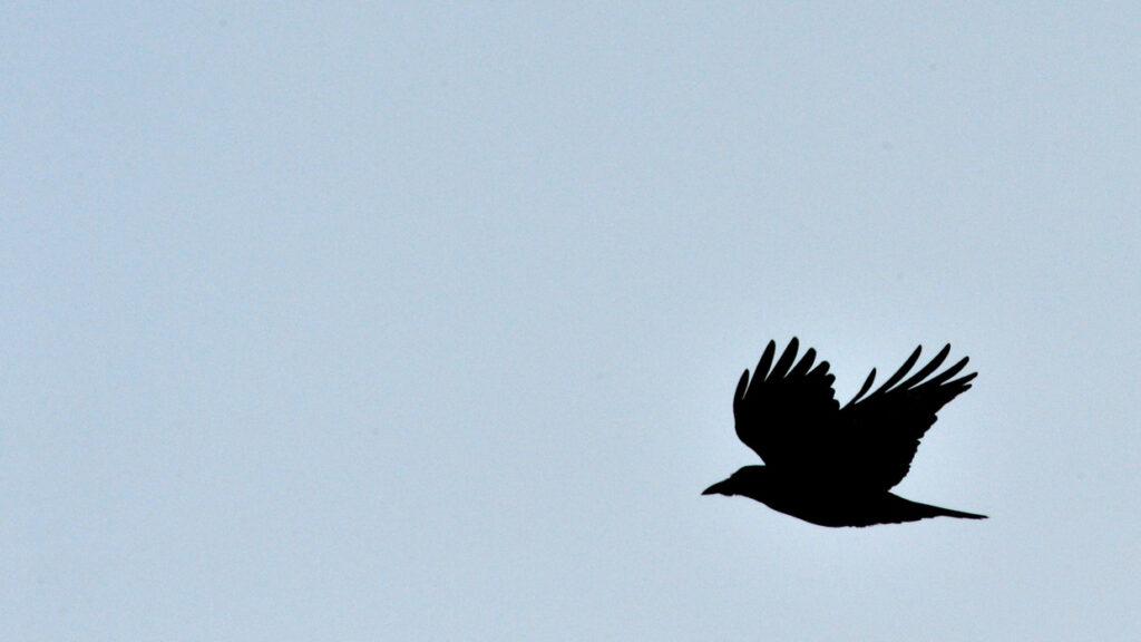 Scena apocalittica, uccelli cadono dal cielo e giacciono sparsi per le strade (VIDEO)