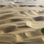 Nuovo studio: ci sono almeno 1,8 miliardi di alberi nei deserti del Sahel e del Sahara
