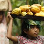 Cacao: gran parte della produzione mondiale deriva dallo sfruttamento del lavoro di 1,5 milioni di bambini