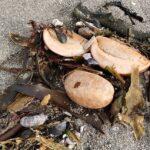 Il WWF si unisce alle indagini sull'inquinamento degli oceani al largo della Kamchatka