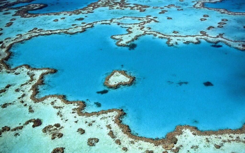 Le barriere coralline possono ancora essere salvate: ecco come
