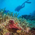 Scoperto un enorme santuario dei coralli nell'Oceano Indiano a prova di cambiamenti climatici
