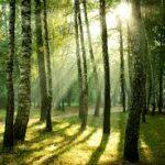 Le foreste europee potrebbero assorbire il doppio dell'anidride carbonica se fossero gestite diversamente