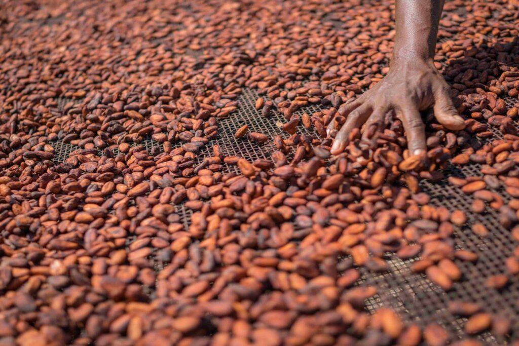 Schiavi bambini: processo storico negli Usa mette sul banco degli imputati le multinazionali del cioccolato