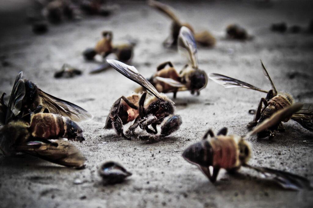 Apocalisse degli insetti: si stanno estinguendo a un ritmo senza precedenti, le conseguenze saranno terribili