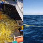 Pescano più plastica che pesce. Le tristi immagini del futuro che è già qui