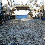 Non ci sono più pesci, bisogna istituire una riserva marina in Adriatico ADESSO! 100 ricercatori scrivono al governo