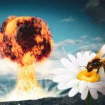 Nucleare: nel miele tracce dei test Usa condotti negli anni '50