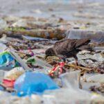 Queste sono le 20 aziende che producono da sole il 55% dei rifiuti di plastica monouso del mondo