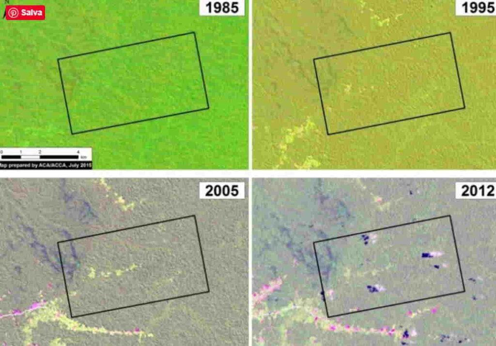 Così il business del cacao ha distrutto la foresta amazzonica vergine del nord del Perù in soli 8 anni