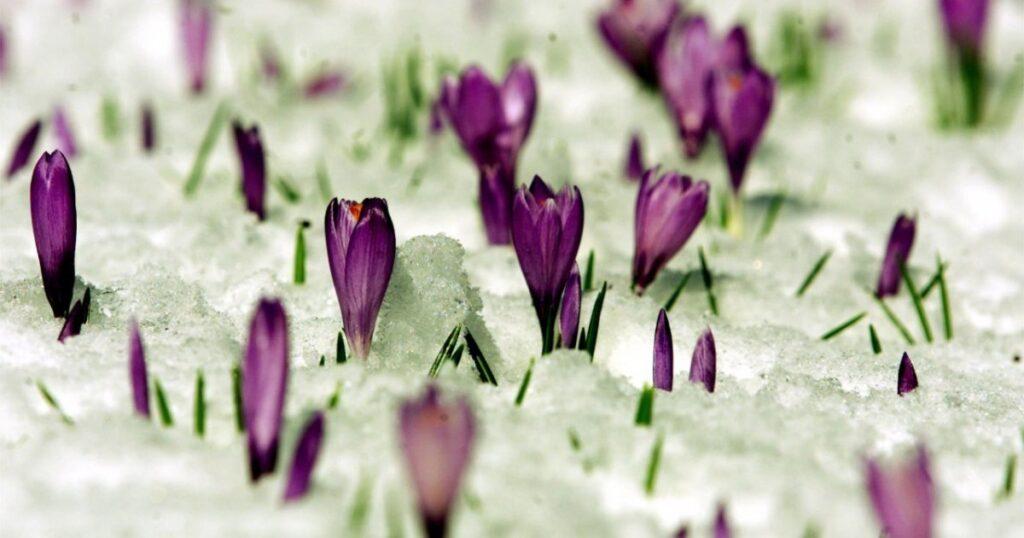 Crisi climatica: Copernicus, la primavera 2021 è stata la più fredda in Europa dal 2013