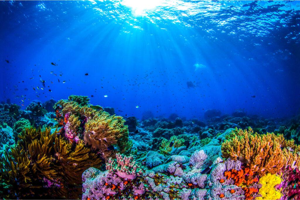 Giornata Mondiale degli Oceani: perché si celebra l'8 giugno