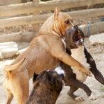 Zoomafie 2021: la lista dei crimini contro gli animali più contestati in Italia fa rabbrividire