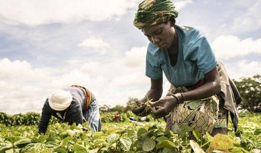 Food System Summit 2021: un monologo delle multinazionali