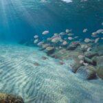 Spiagge e specie a rischio: perché la Giornata del Mar Mediterraneo oggi è più importante che mai