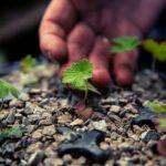 Se i governi smettessero di danneggiare la natura, si creerebbero milioni di posti di lavoro