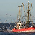 Stop alla pesca nel Mare Adriatico: niente pesce fresco fino al 16 settembre